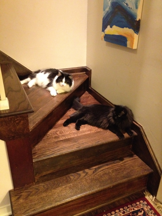 Kitties getting comfortable in their new (temporary) home.