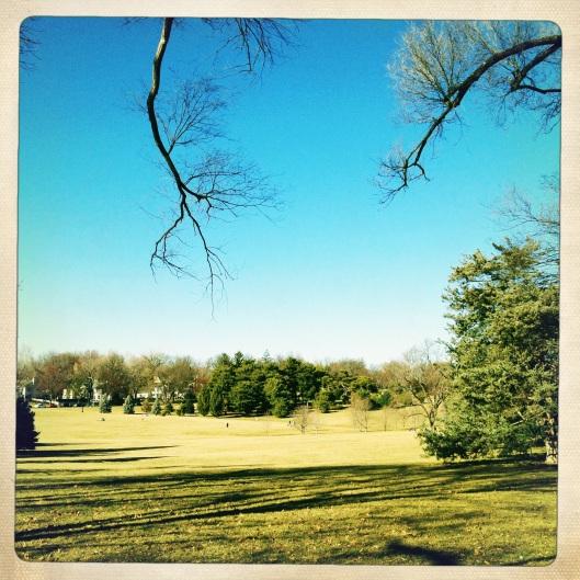 bog park shot