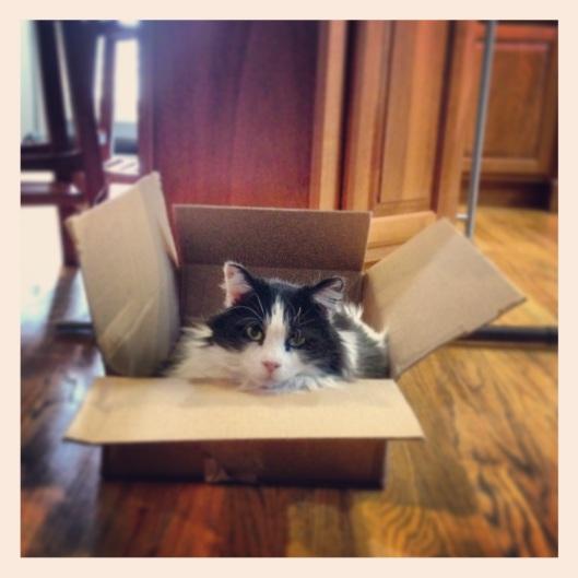 Their new favorite box