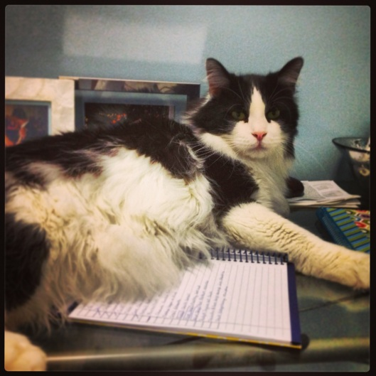"Kitty says ""To do list? What to-do list?"""
