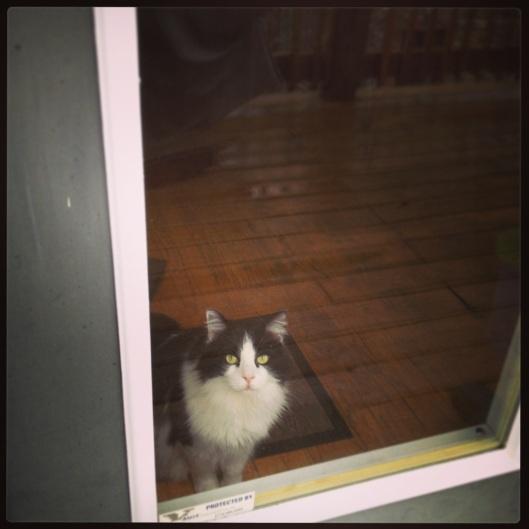 My door greeter