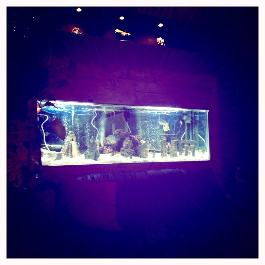 Fish tank at Space Time Tanks where I went Floating in a Sensory Deprivation Tank (#10: Entry forthcoming)